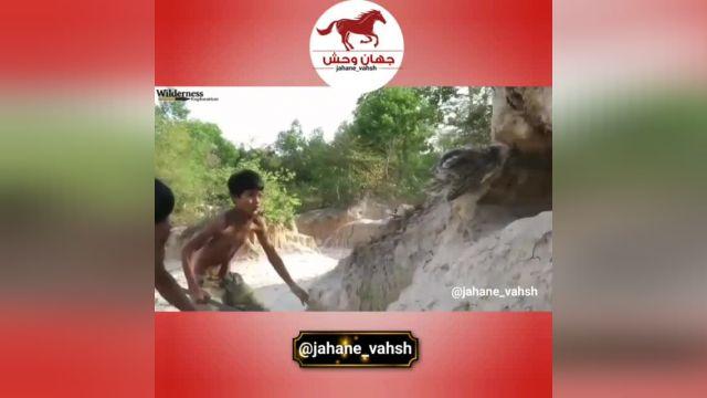 کلیپ هیجانانگیز حمله مار پیتون به لانه عقاب !