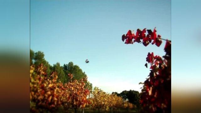 دانلود انیمیشن زندگی خصوصی حشرات قسمت پنجاه و هفت