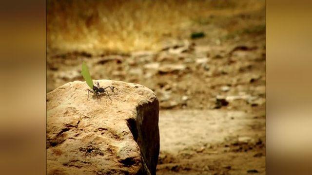 دانلود انیمیشن زندگی خصوصی حشرات قسمت شانزده