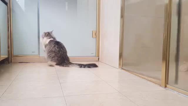 کلیپ جالب از تلاش یک گربه برای نجات دادن یک سگ از حمام کردن !!!