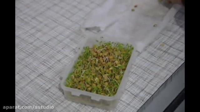آموزش تصویری درست سبزه ماش و عدس در نوروز 1400 - درست کردن سبزه عید