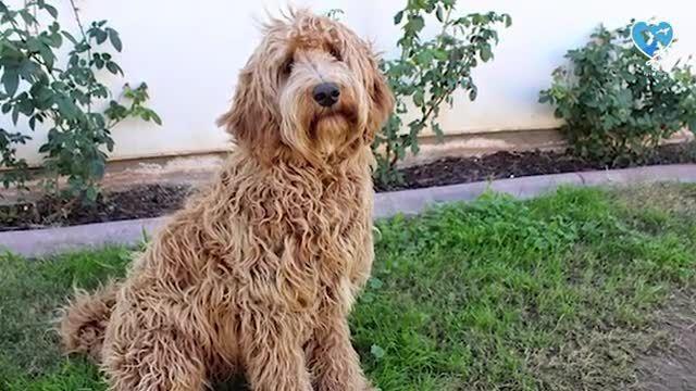 سگ و نژادهای مختلف آنها - معرفی و قیمت 10 نژاد سگ محبوب