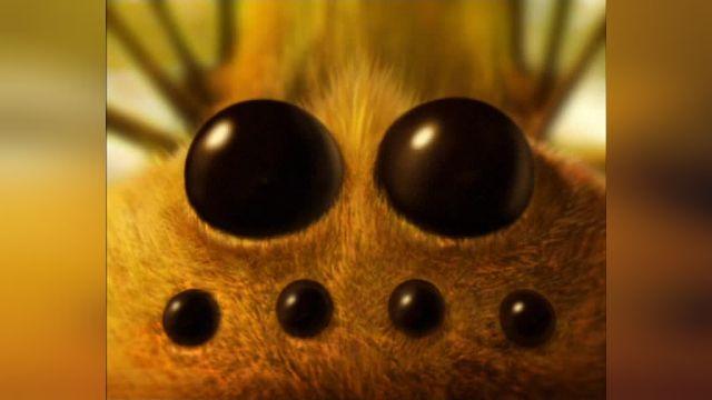 دانلود انیمیشن زندگی خصوصی حشرات قسمت بیست و چهار