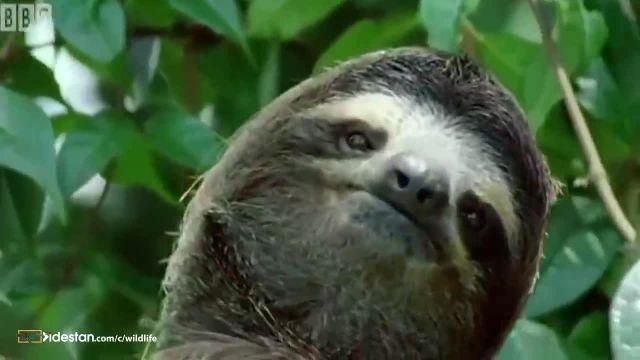 کلیپ جالب درباره خنگ ترین حیوانات در حیات وحش !
