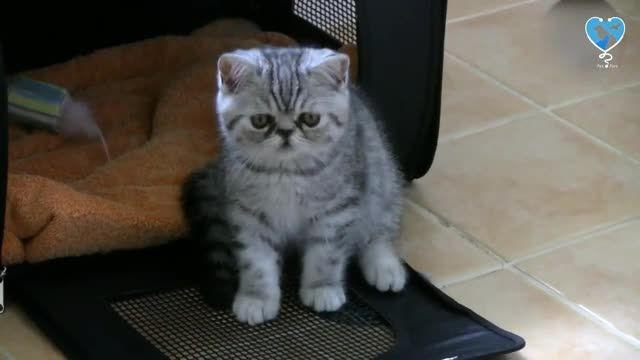 قیمت و مشخصات هشت نژاد گربه محبوب در ایران