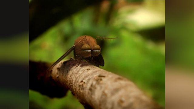 دانلود انیمیشن زندگی خصوصی حشرات قسمت پنجاه