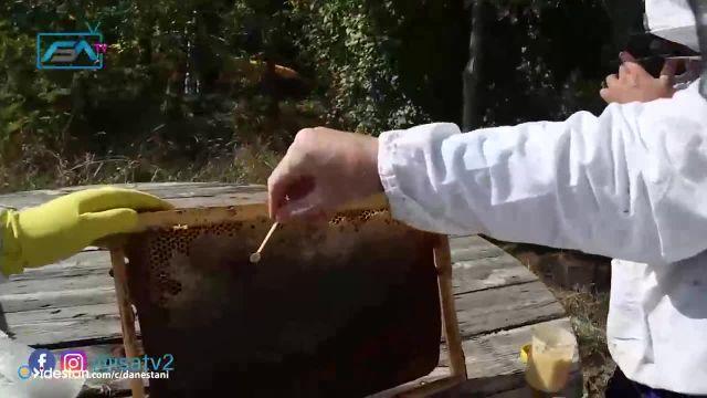 کلیپ اهمیت زنبور عسل برای زمین - اگر زنبور عسل نبود چه اتفاقی می افتاد !