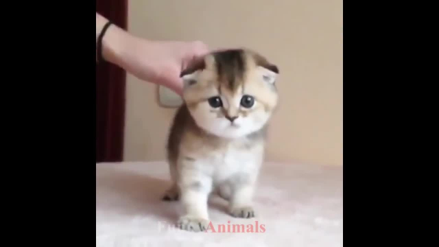 کلیپ جالب و باحال از بچه گربه های با نمک