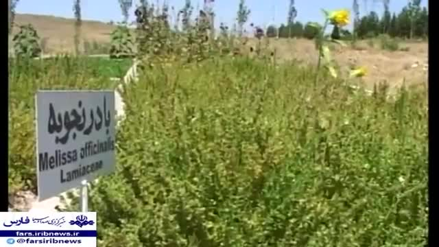 Iran made Herbal plants drying machine, Pasargad county ساخت خشک کن گیاهان دارویی پاسارگاد ایران