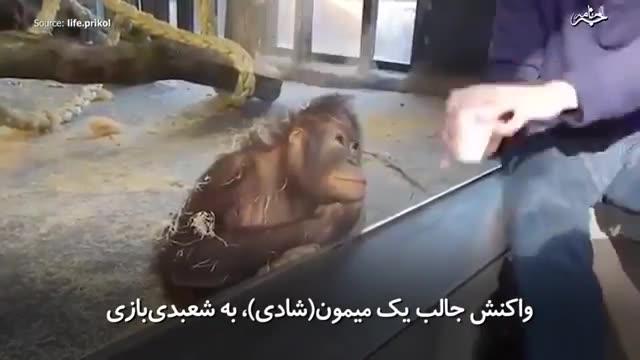 زمانی که میمون (شادی) با کار شعبدهباز از شدت خنده از حال میرود.