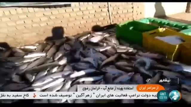 Iran Fish farming by Cement factory, Neyshapour county پرورش ماهی شهرستان نیشاپور ایران
