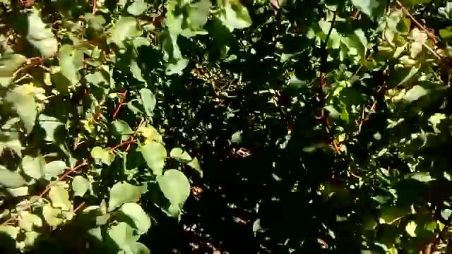 فروش نهال درخت در نهالستان