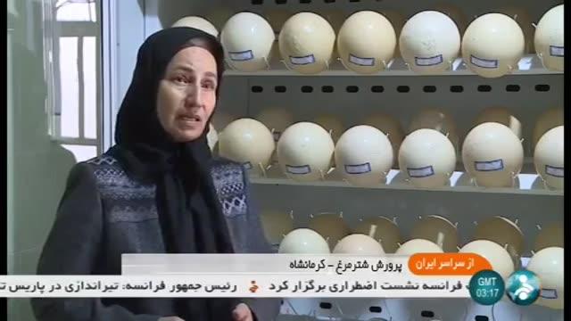Iran Ostrich farming & Egg handling, Sahneh county پرورش شترمرغ و تخم شترمرغ شهرستان صحنه ایران