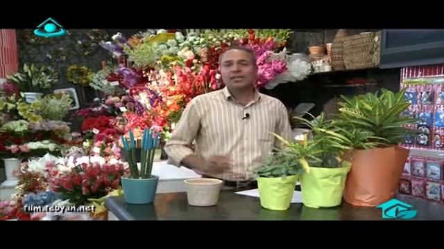 خاک و انتخاب گلدان مناسب برای گیاه