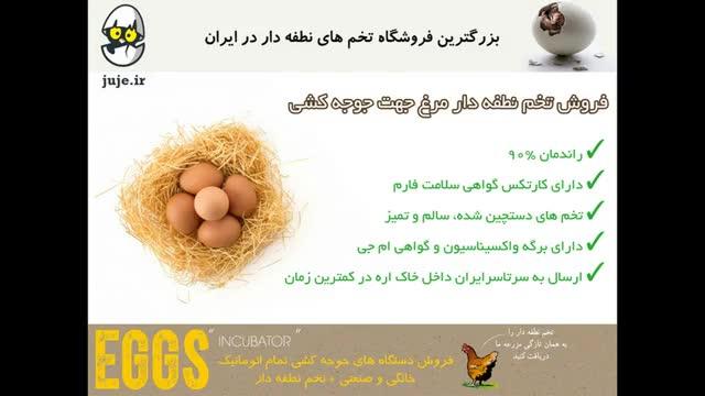 فروش بهترین تخم های نطفه دار مرغ و طیور به همراه ماشین جوجه کشی