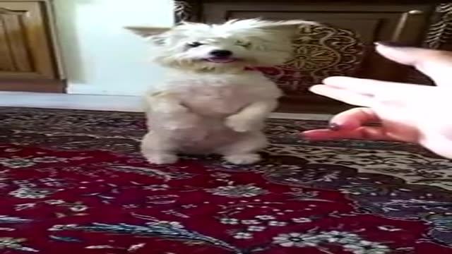 اشکنان دوربین سگ بسیار زیبا Dog nise