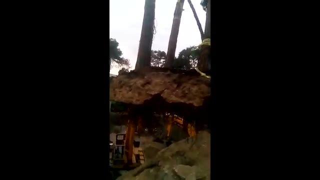 مجری جابجایی درختان بزرگ و فروش انواع نهال و درخت مثمر و غیر مثمر در چهار فصل سال نجات درخت نجات زند