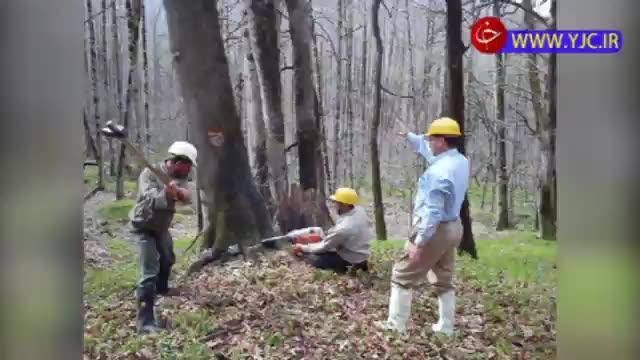 مشکلات پیش روی طرح تنفس جنگلها و توقف بهرهبرداری تجاری از جنگلهای شمال