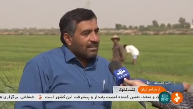 Iran Rice fields, Khoramshahr county کشتزار برنج شهرستان خرمشهر ایران