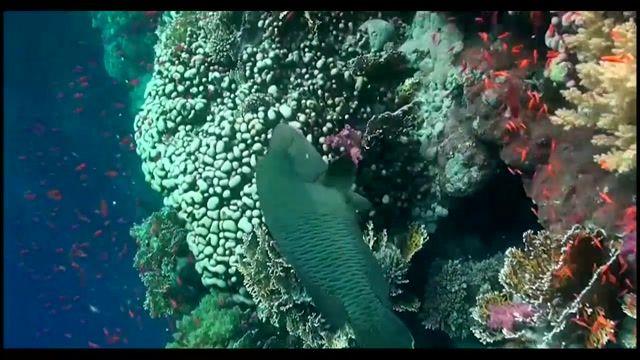 غواصی در سواحل دریای سرخ مصر یکی از 10 مکان برتر برای غواصی