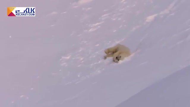 حرکات جالب یک بچه خرس هنگام بازی در باغ وحش اوهایو