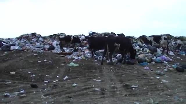 فاجعه زیست محیطی در شهرهای شمالی ایران