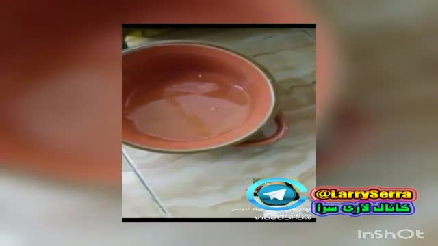 تغذیه تقویتی خوب برای خروس لاری کانال لاری سرا