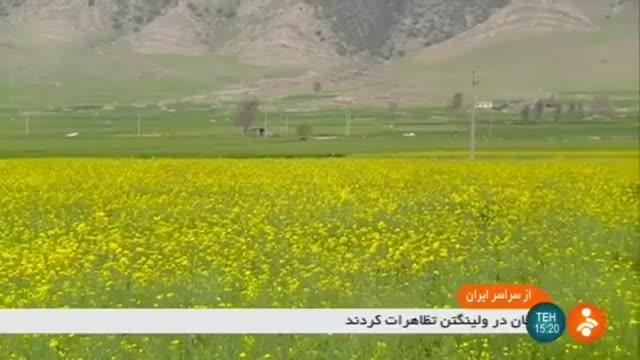Iran Canola harvest, Sar-e Pol-e Zahab county برداشت کلزا شهرستان سرپل ذهاب ایران