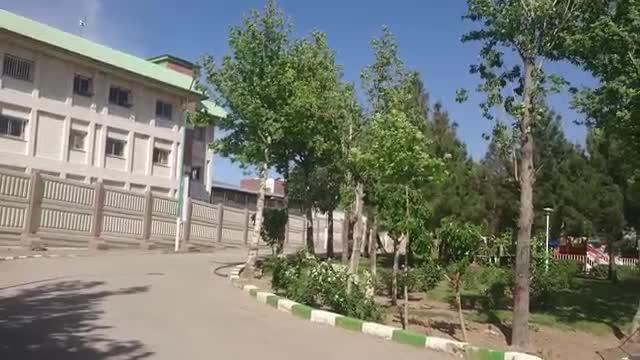 جابجایی درخت به جای قطع آنها نجات درخت نجات زندگیست بزرگترین مرکز تخصصی جابجایی درختان بزرگ