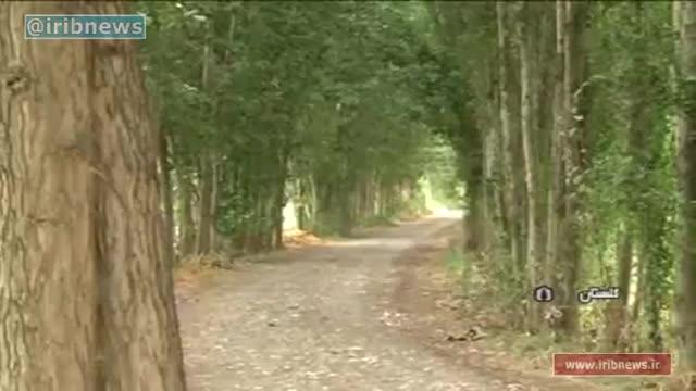 استراحت جنگل با زراعت چوب