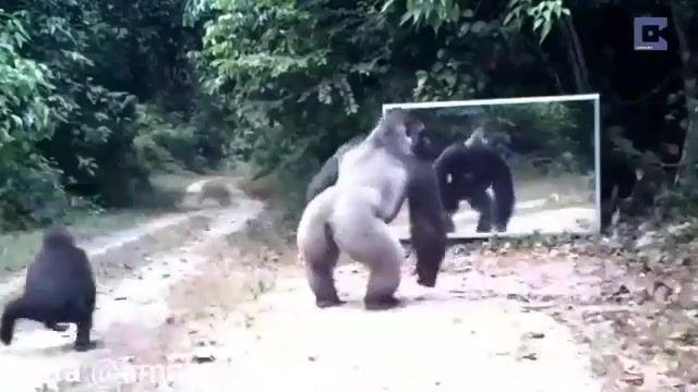 واکنش جالب حیوانات در برابر آینه