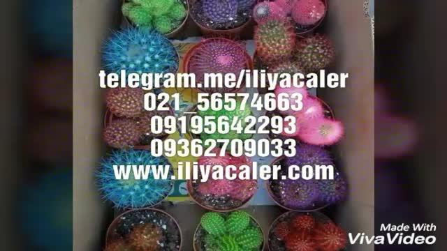 پودر و چسب فلوک ایلیاکالر02156574663