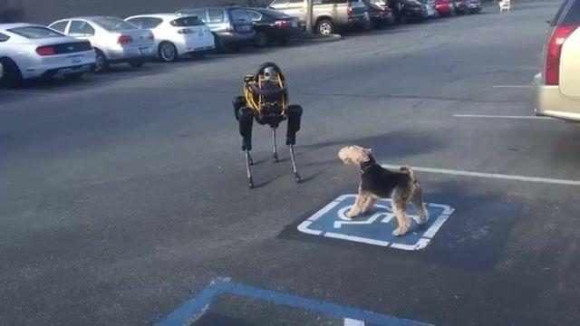 عکس العمل سگ مصنوعی اسپات و سگ واقعی