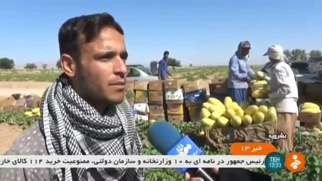 Iran Melon harvest, Boshruyeh county برداشت خربزه شهرستان بشرویه ایران