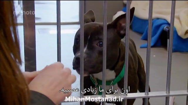 مستند بهترین دوست انسان با دوبله فارسی