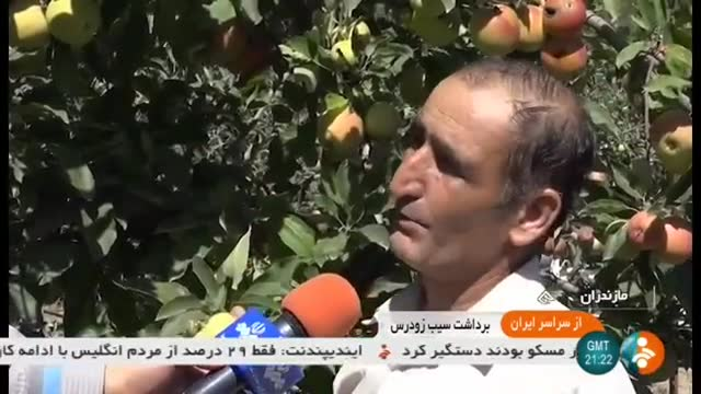Iran Apple harvest, Sari county برداشت سیب شهرستان ساری ایران