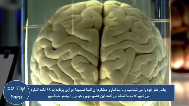 10 تا از نکات جالب درباره مغز انسان ها و 8 نکته دیگر  Top 10 farsi