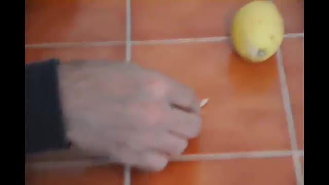 طریقه کاشت و نگهداری گیاه لیمو از هسته