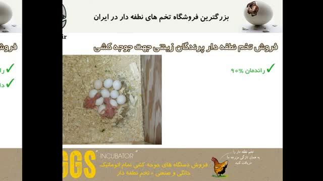 فروش انواع تخم نطفه دار ماکیان زینتی در جوجه دات آی آر