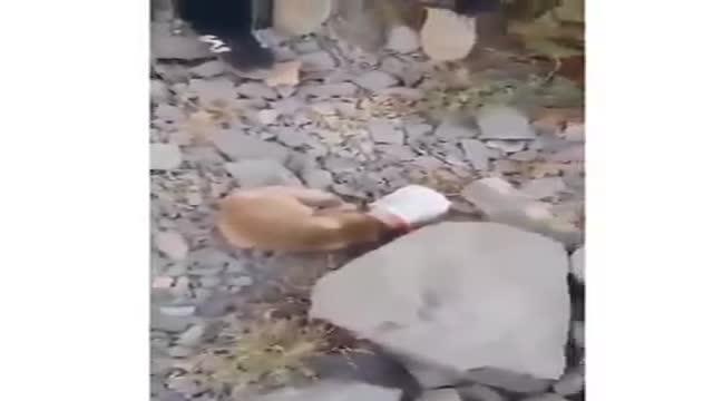 نجات روباه گیر کرده در دبه توسط کوهنوردان بروجردی   Rescue of a fox by Iranian climbers