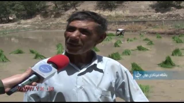 ایجاد اشتغال برای هشت هزار کشاورز استانکهگیلویه و بویراحمد با کشت برنج