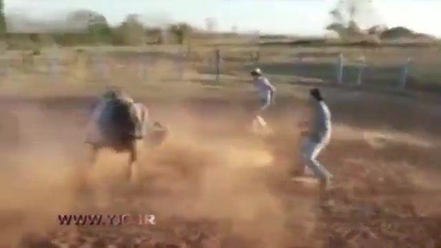 ضربه مرگبار گاو منجر به کشته شدن گاوباز اسپانیایی شد