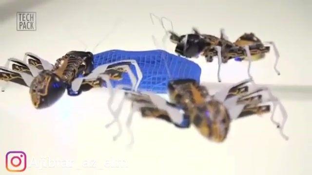 ربات های مورچه جدیدترین ساخته های ریز و کاربردی بشر در زمینه رباتیک