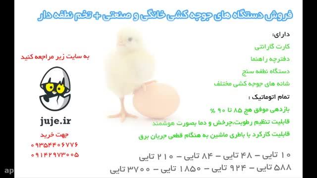 دستگاه تبدیل تخم به جوجه 1850 تایی ، دارای شانه برای انواع تخم ها