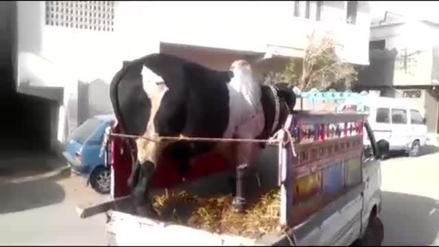 فناوری هوشمند مدرن گاو و خوک حمل و نقل مگا ماشین حمل بار کامیون بار زیاد