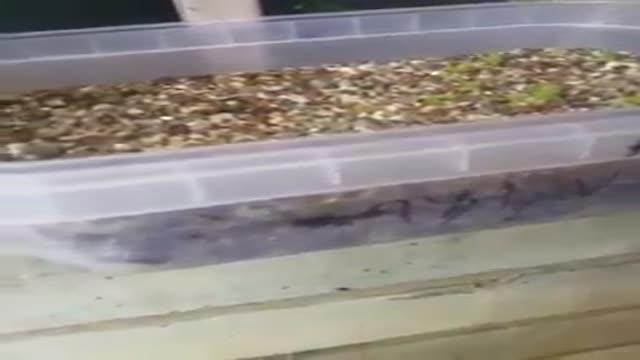 کشت بذر کاکتوس خانگی قسمت سوم