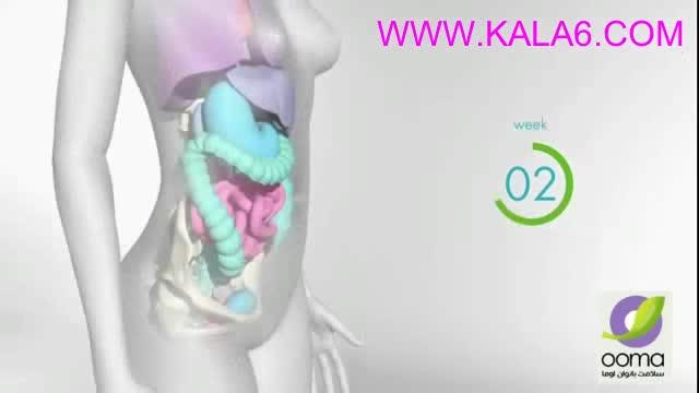تغییرات بدن شما در بارداری هفته به هفته WWW KALA6 COM