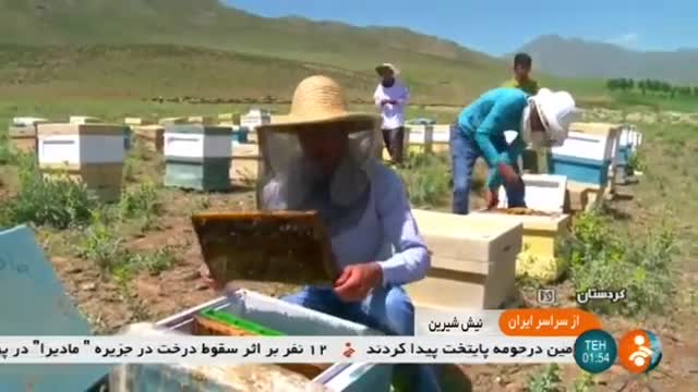 Iran Honey production, Badr & Parishan hills, Kurdistan تولید عسل بلندیهای بدر و پریشان کردستان