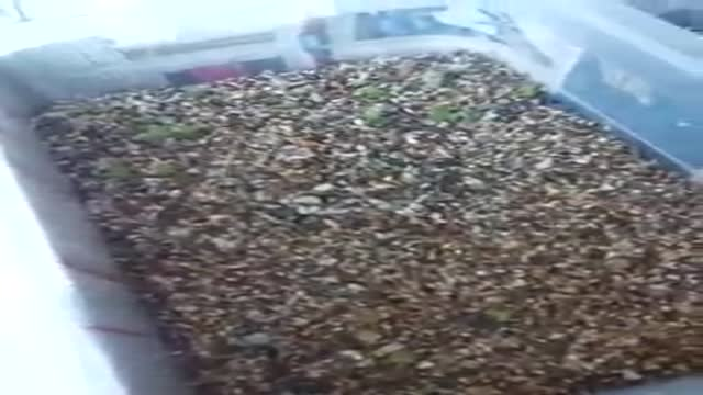کشت بذر کاکتوس خانگی قسمت پنجم.ابزار کشت