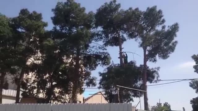 هرس انواع درختان بزرگ میوه و غیرمثمر پخش نهال تهران و حومه